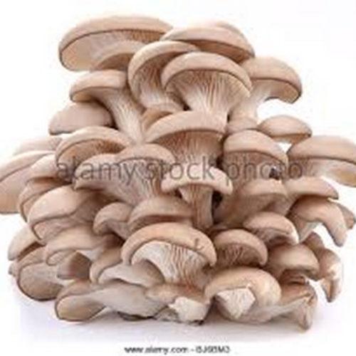Skylight Mushroom Home Grow project